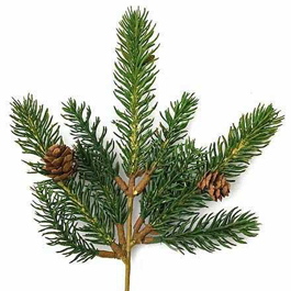 Holiday Pine