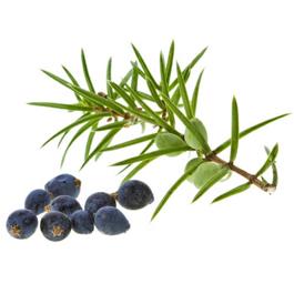 Juniper Oils