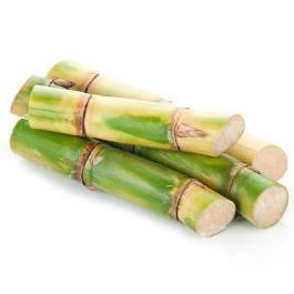 Sugar Cane