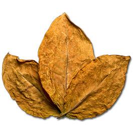 Tobacco Bark