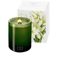 Dayna Decker Botanika Manzanita Candle 6oz